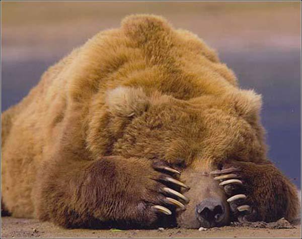 クマの冬眠から学ぶ販売促進